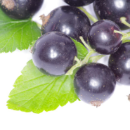 Black Currant Balsamic Vinegar