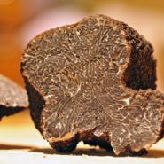 photodune-874153-truffles-xs